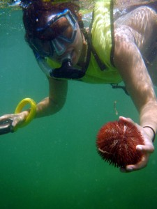 Short Spine Sea Urchin in Key West with Namaste Sailing