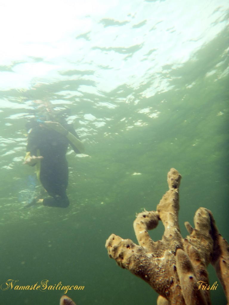 A snorkeler hovers over a sponge